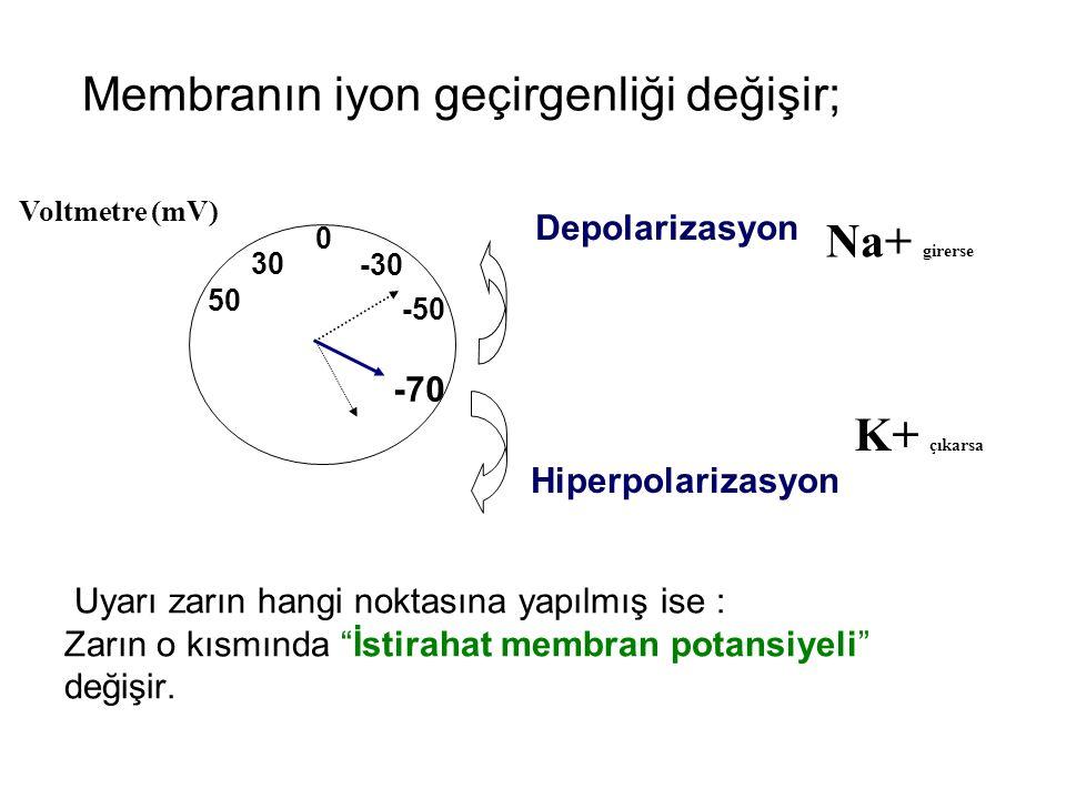 Membranın iyon geçirgenliği değişir;