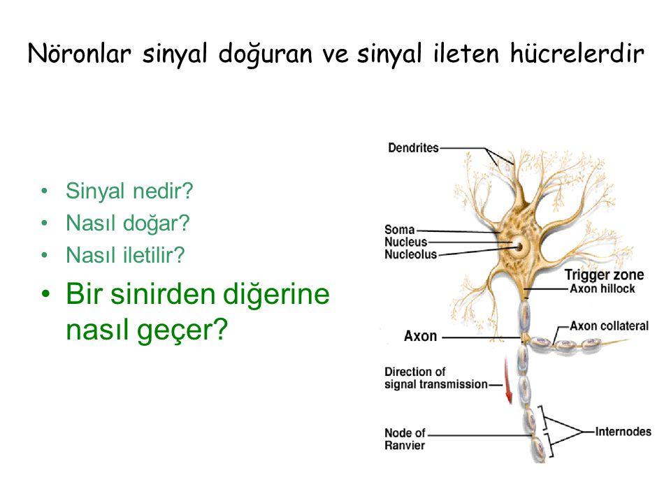 Nöronlar sinyal doğuran ve sinyal ileten hücrelerdir
