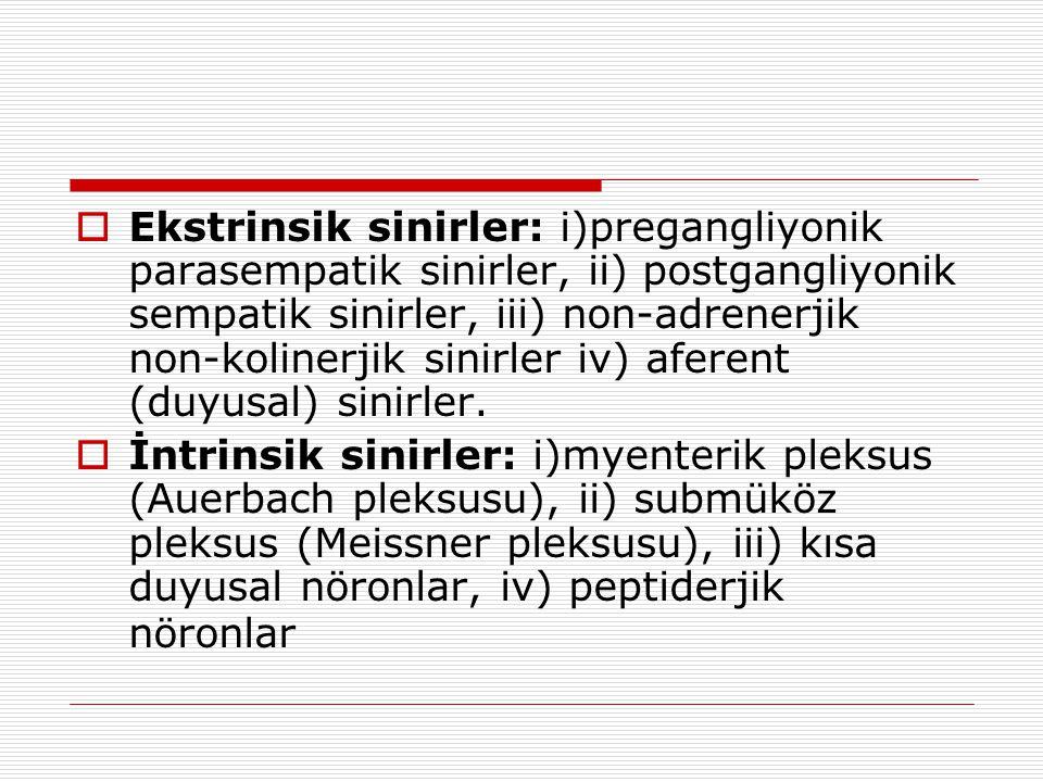 Ekstrinsik sinirler: i)pregangliyonik parasempatik sinirler, ii) postgangliyonik sempatik sinirler, iii) non-adrenerjik non-kolinerjik sinirler iv) aferent (duyusal) sinirler.
