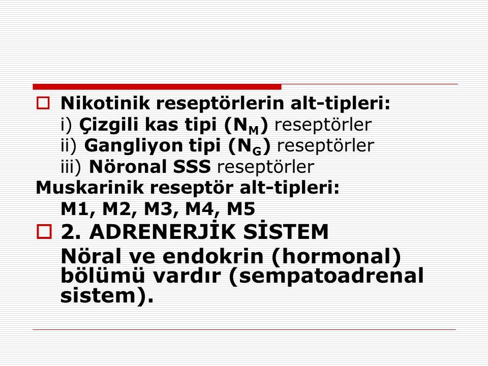 Nöral ve endokrin (hormonal) bölümü vardır (sempatoadrenal sistem).