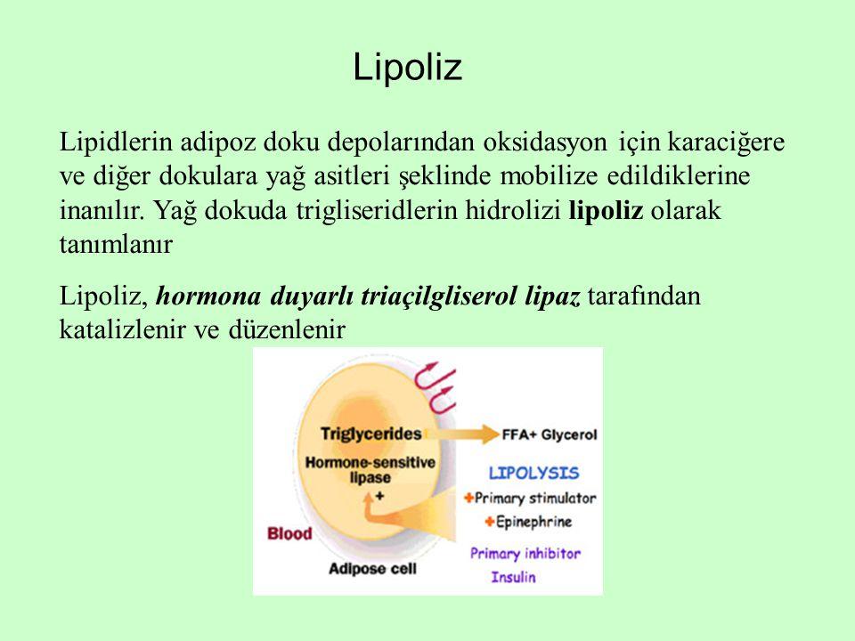 Lipoliz