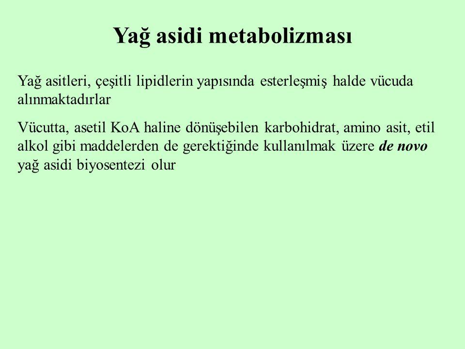 Yağ asidi metabolizması