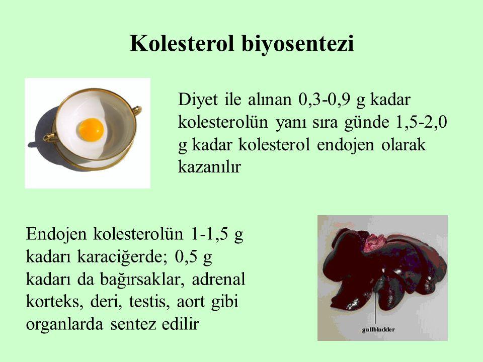 Kolesterol biyosentezi