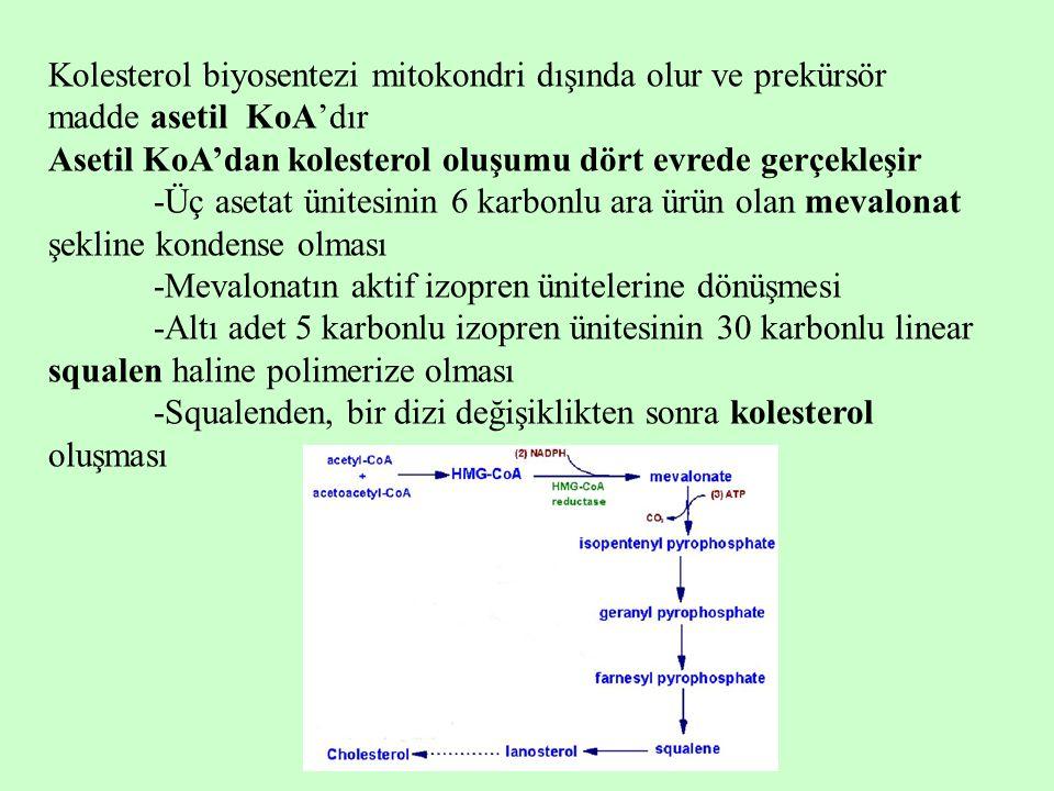 Kolesterol biyosentezi mitokondri dışında olur ve prekürsör madde asetil KoA'dır