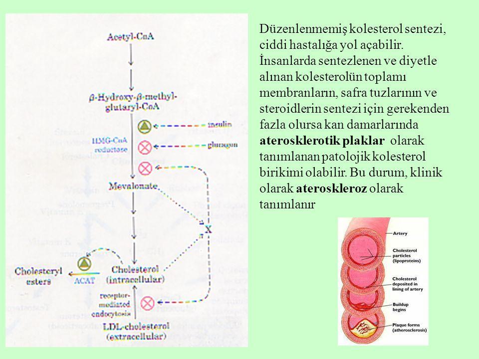 Düzenlenmemiş kolesterol sentezi, ciddi hastalığa yol açabilir