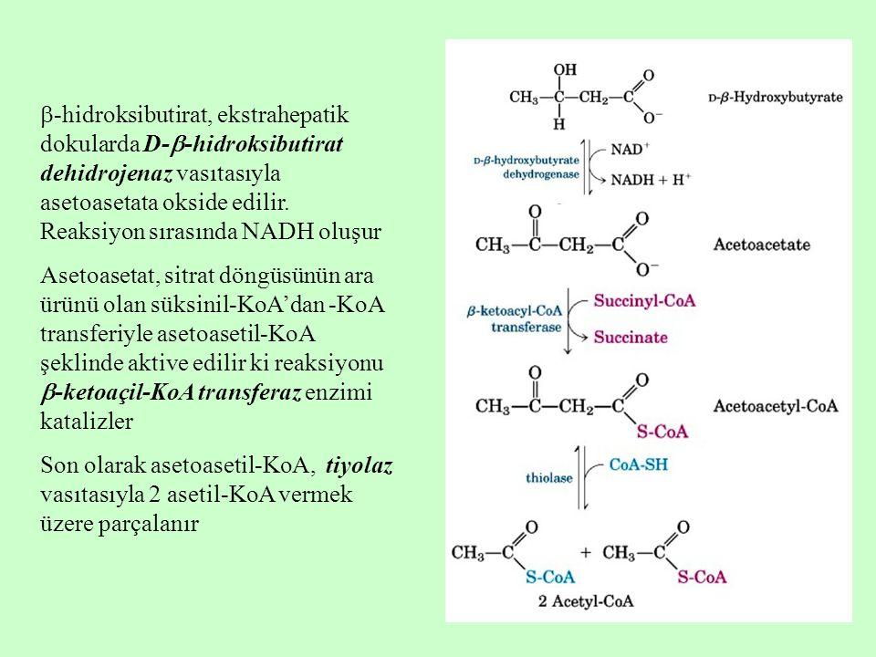 -hidroksibutirat, ekstrahepatik dokularda D--hidroksibutirat dehidrojenaz vasıtasıyla asetoasetata okside edilir. Reaksiyon sırasında NADH oluşur
