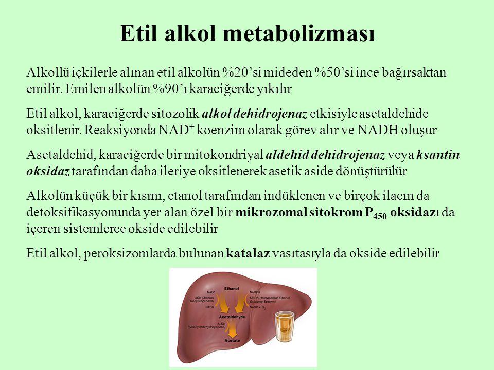 Etil alkol metabolizması