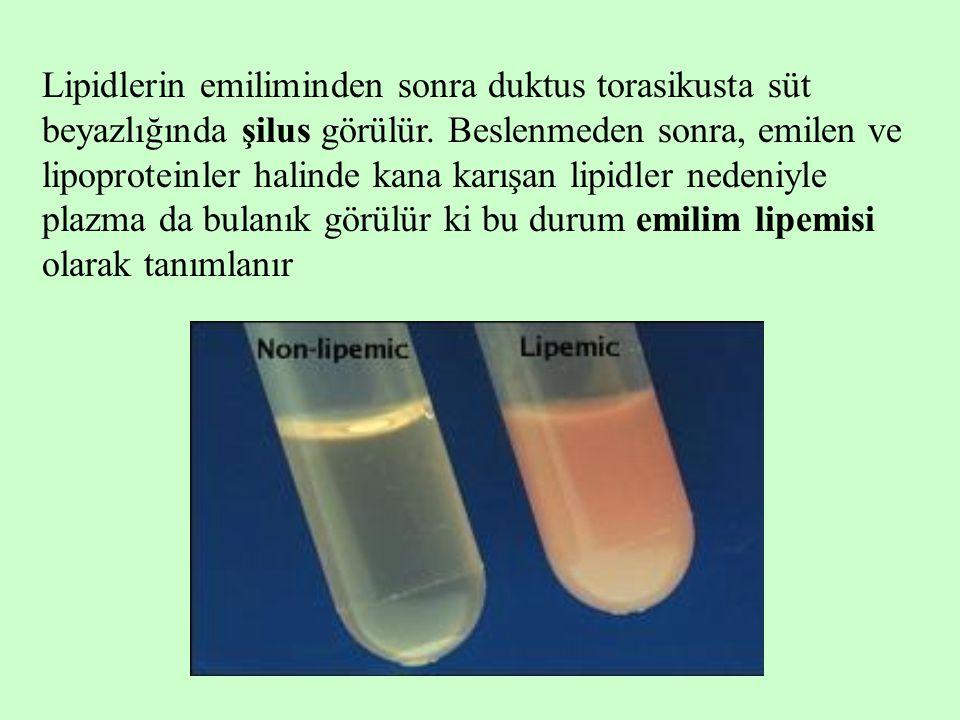 Lipidlerin emiliminden sonra duktus torasikusta süt beyazlığında şilus görülür.