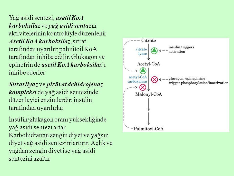 Yağ asidi sentezi, asetil KoA karboksilaz ve yağ asidi sentazın aktivitelerinin kontrolüyle düzenlenir Asetil KoA karboksilaz, sitrat tarafından uyarılır; palmitoil KoA tarafından inhibe edilir. Glukagon ve epinefrin de asetil KoA karboksilaz'ı inhibe ederler