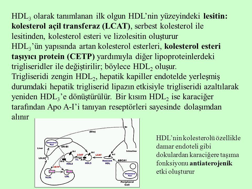 HDL3 olarak tanımlanan ilk olgun HDL'nin yüzeyindeki lesitin: kolesterol açil transferaz (LCAT), serbest kolesterol ile lesitinden, kolesterol esteri ve lizolesitin oluşturur