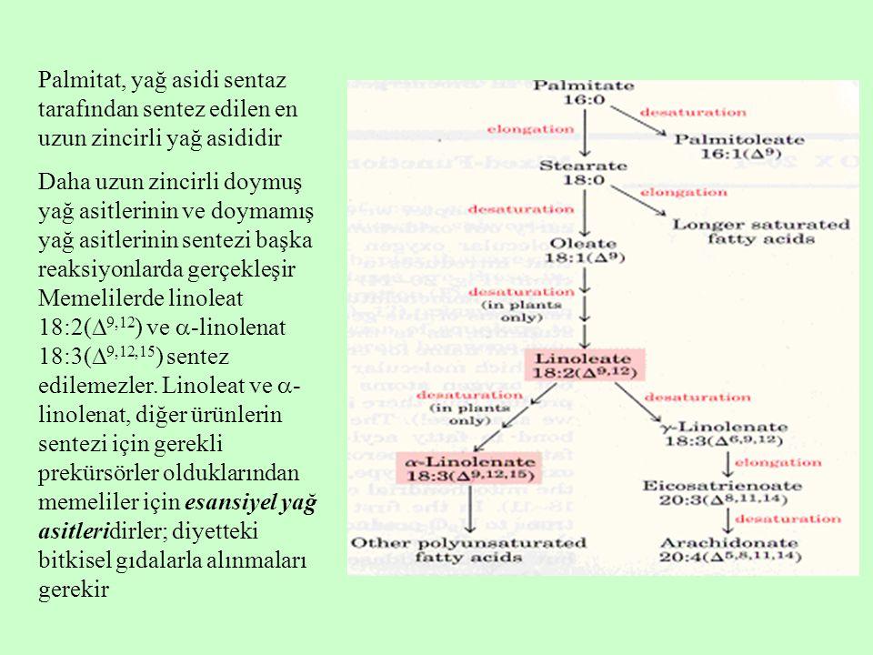 Palmitat, yağ asidi sentaz tarafından sentez edilen en uzun zincirli yağ asididir