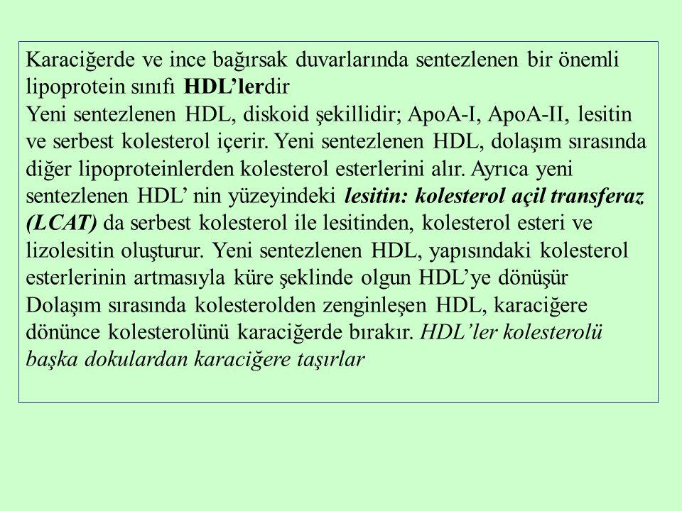 Karaciğerde ve ince bağırsak duvarlarında sentezlenen bir önemli lipoprotein sınıfı HDL'lerdir