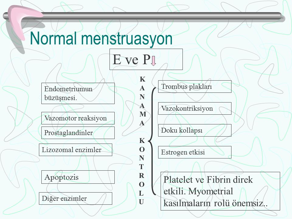 Normal menstruasyon E ve P
