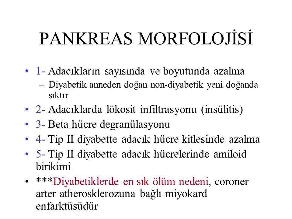 PANKREAS MORFOLOJİSİ 1- Adacıkların sayısında ve boyutunda azalma