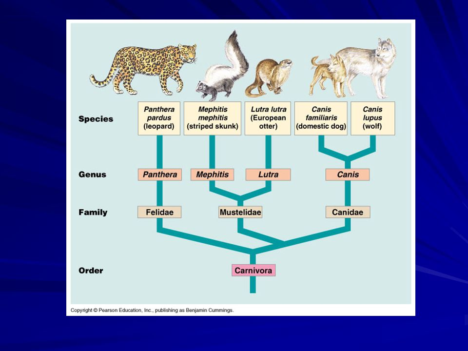 Taxonomy versus phylogeny (cont'd)