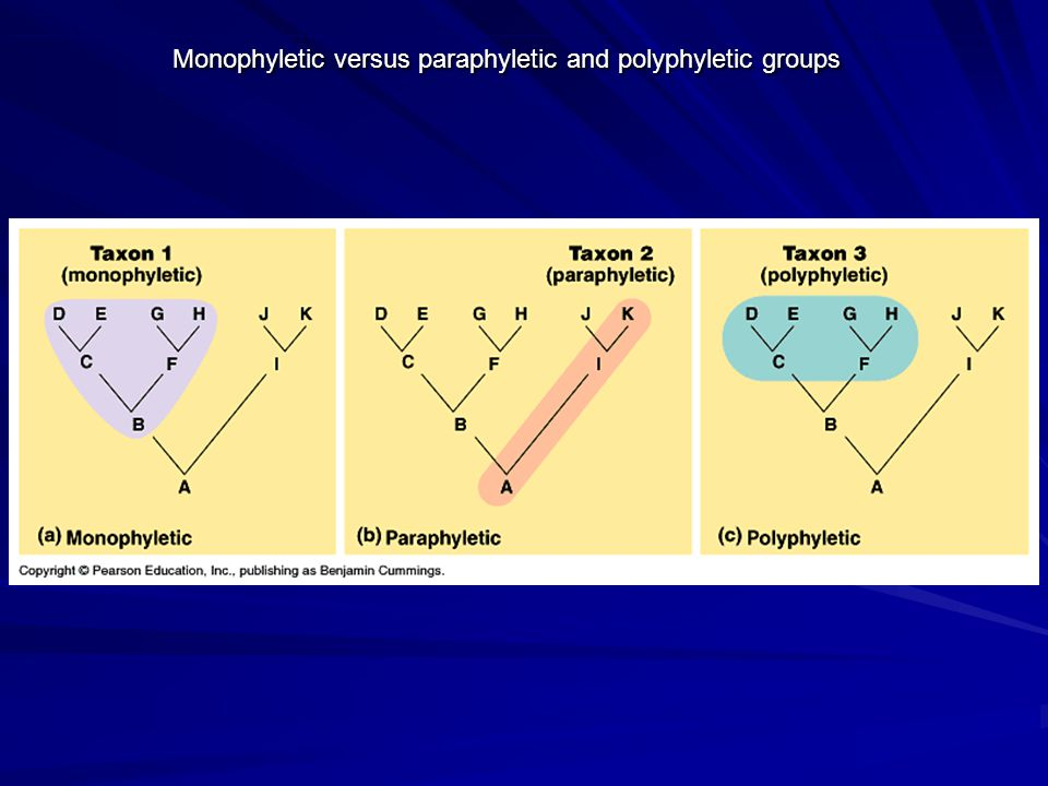 Monophyletic versus paraphyletic and polyphyletic groups