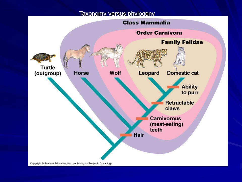 Taxonomy versus phylogeny