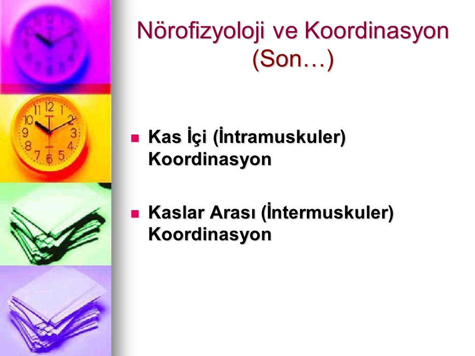 Nörofizyoloji ve Koordinasyon (Son…)