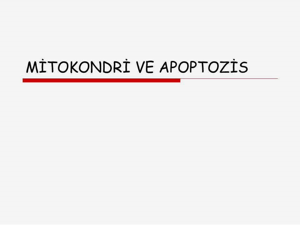 MİTOKONDRİ VE APOPTOZİS