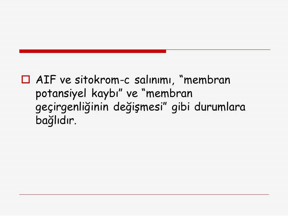 AIF ve sitokrom-c salınımı, membran potansiyel kaybı ve membran geçirgenliğinin değişmesi gibi durumlara bağlıdır.