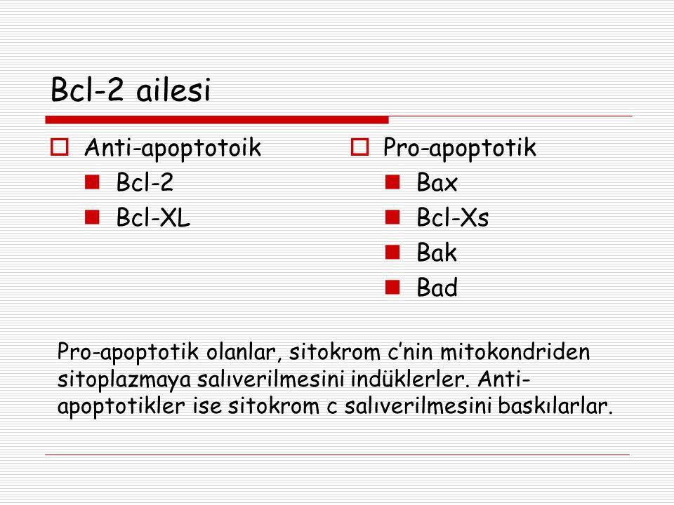 Bcl-2 ailesi Anti-apoptotoik Bcl-2 Bcl-XL Pro-apoptotik Bax Bcl-Xs Bak