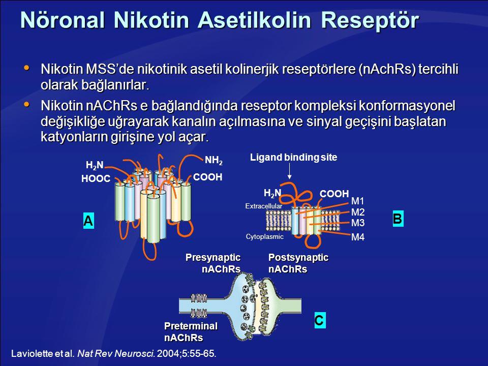 Nöronal Nikotin Asetilkolin Reseptör