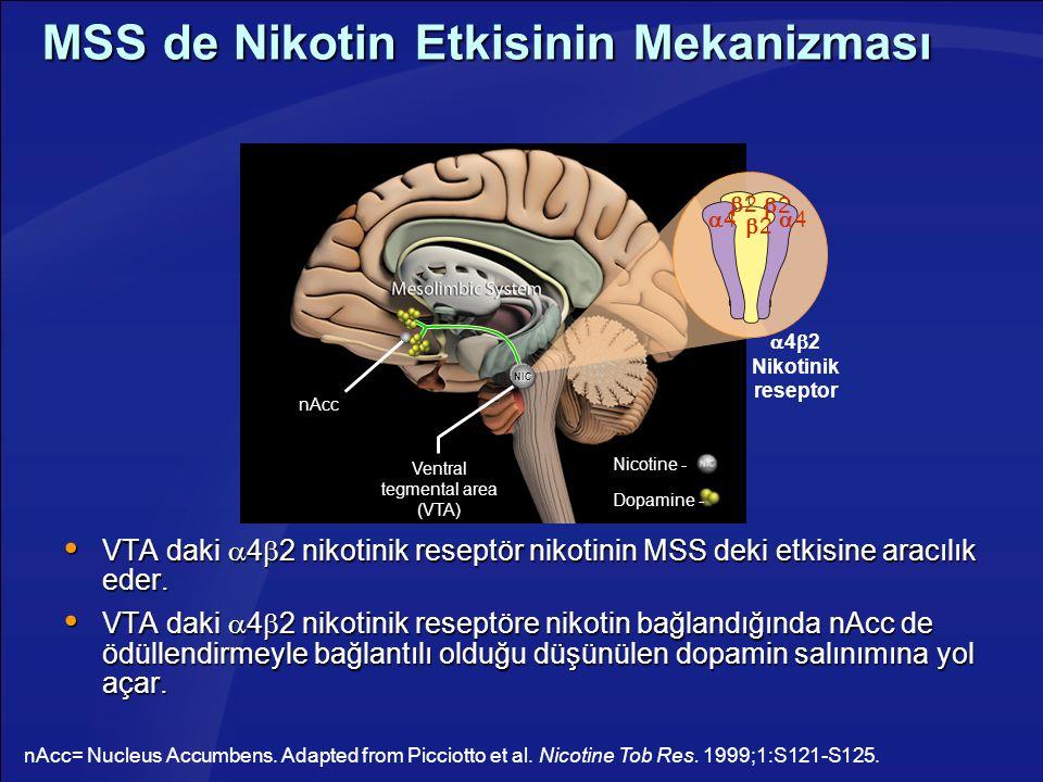 MSS de Nikotin Etkisinin Mekanizması