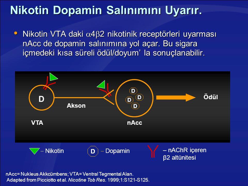 Nikotin Dopamin Salınımını Uyarır.