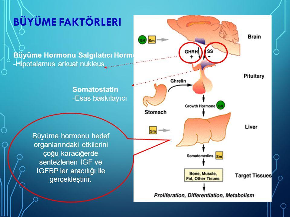 Büyüme faktörleri Büyüme Hormonu Salgılatıcı Hormon