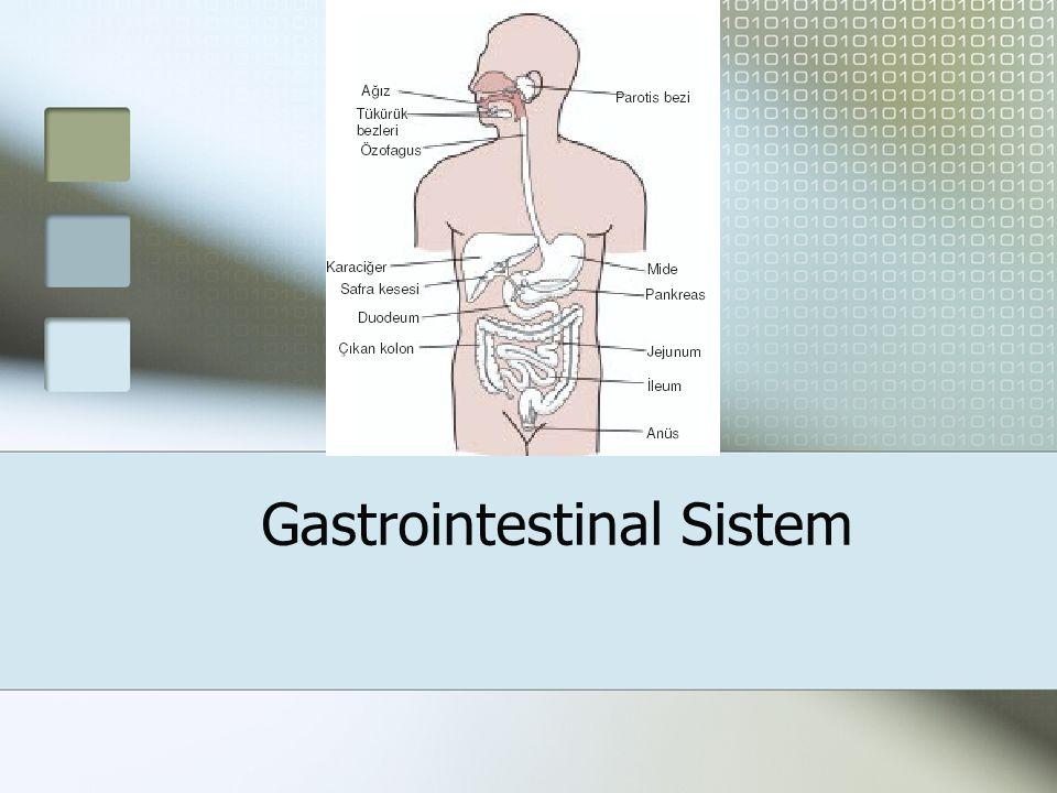 Gastrointestinal Sistem