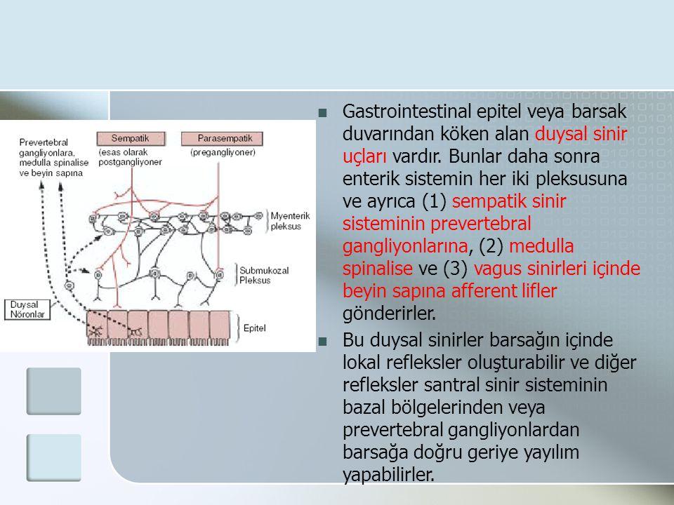 Gastrointestinal epitel veya barsak duvarından köken alan duysal sinir uçları vardır. Bunlar daha sonra enterik sistemin her iki pleksusuna ve ayrıca (1) sempatik sinir sisteminin prevertebral gangliyonlarına, (2) medulla spinalise ve (3) vagus sinirleri içinde beyin sapına afferent lifler gönderirler.