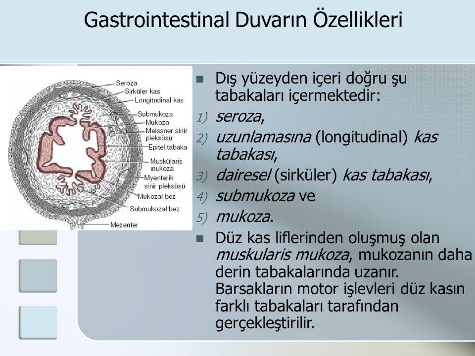 Gastrointestinal Duvarın Özellikleri