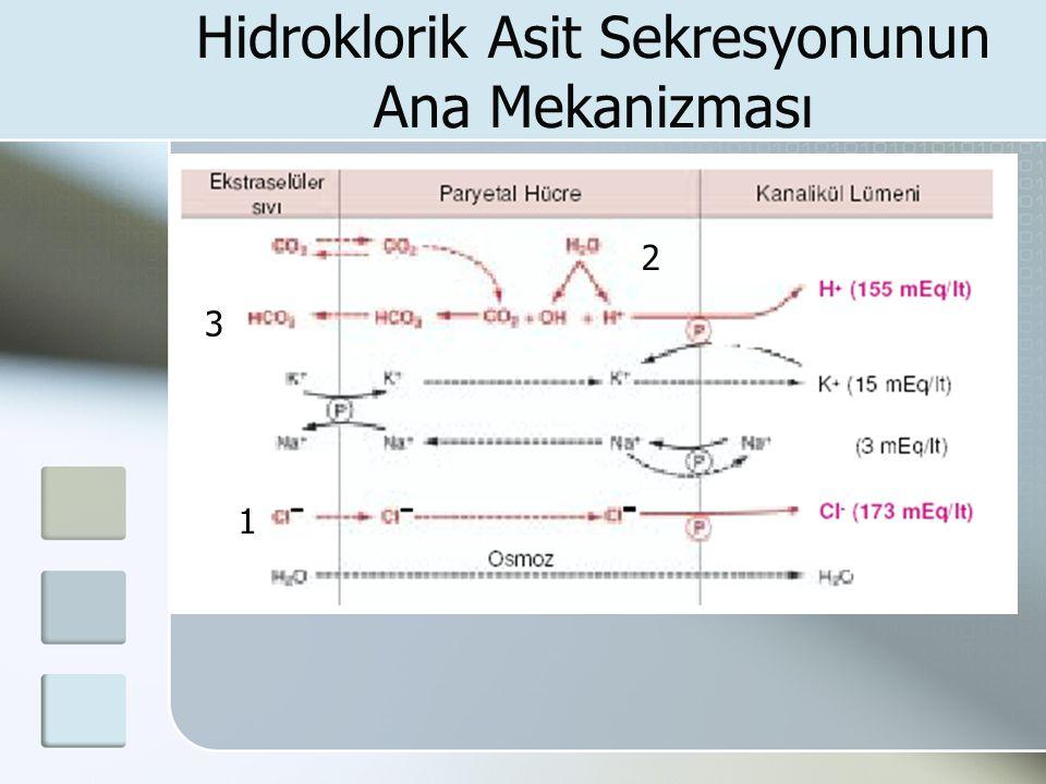 Hidroklorik Asit Sekresyonunun Ana Mekanizması