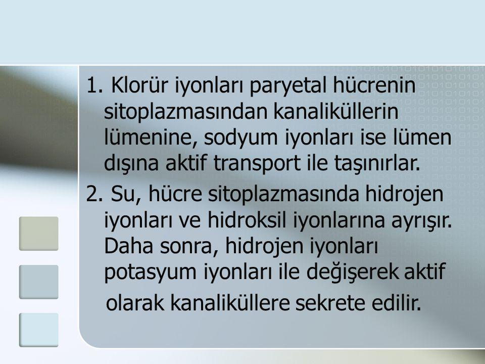 1. Klorür iyonları paryetal hücrenin sitoplazmasından kanaliküllerin lümenine, sodyum iyonları ise lümen dışına aktif transport ile taşınırlar.