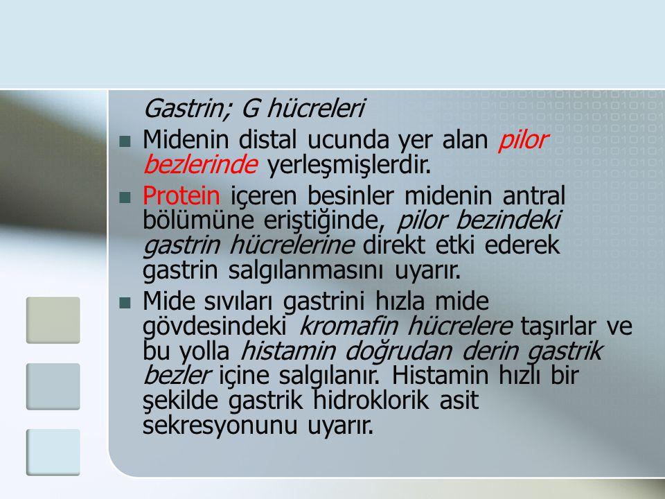 Gastrin; G hücreleri Midenin distal ucunda yer alan pilor bezlerinde yerleşmişlerdir.