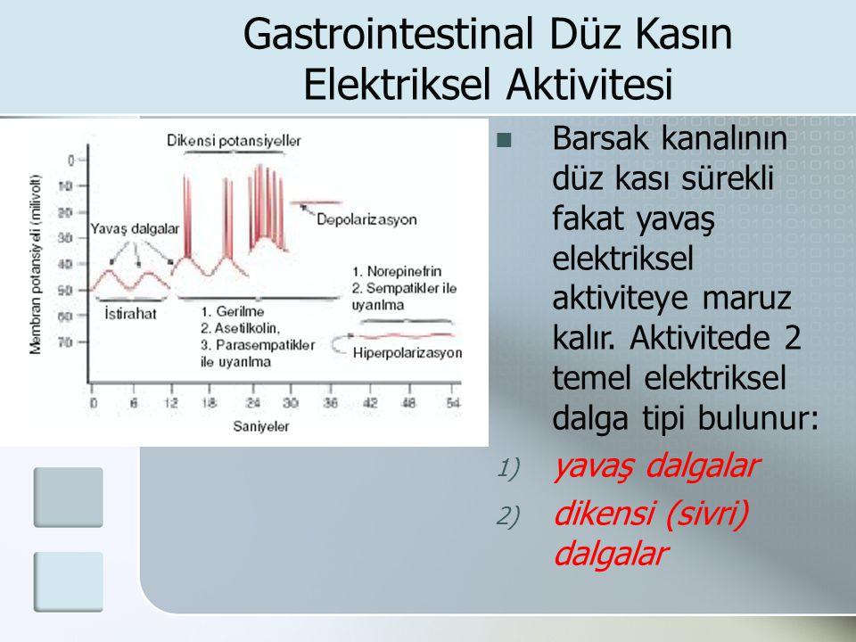 Gastrointestinal Düz Kasın Elektriksel Aktivitesi