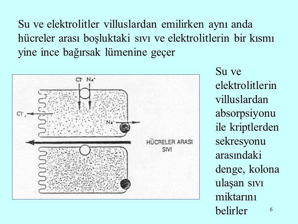 Su ve elektrolitler villuslardan emilirken aynı anda hücreler arası boşluktaki sıvı ve elektrolitlerin bir kısmı yine ince bağırsak lümenine geçer