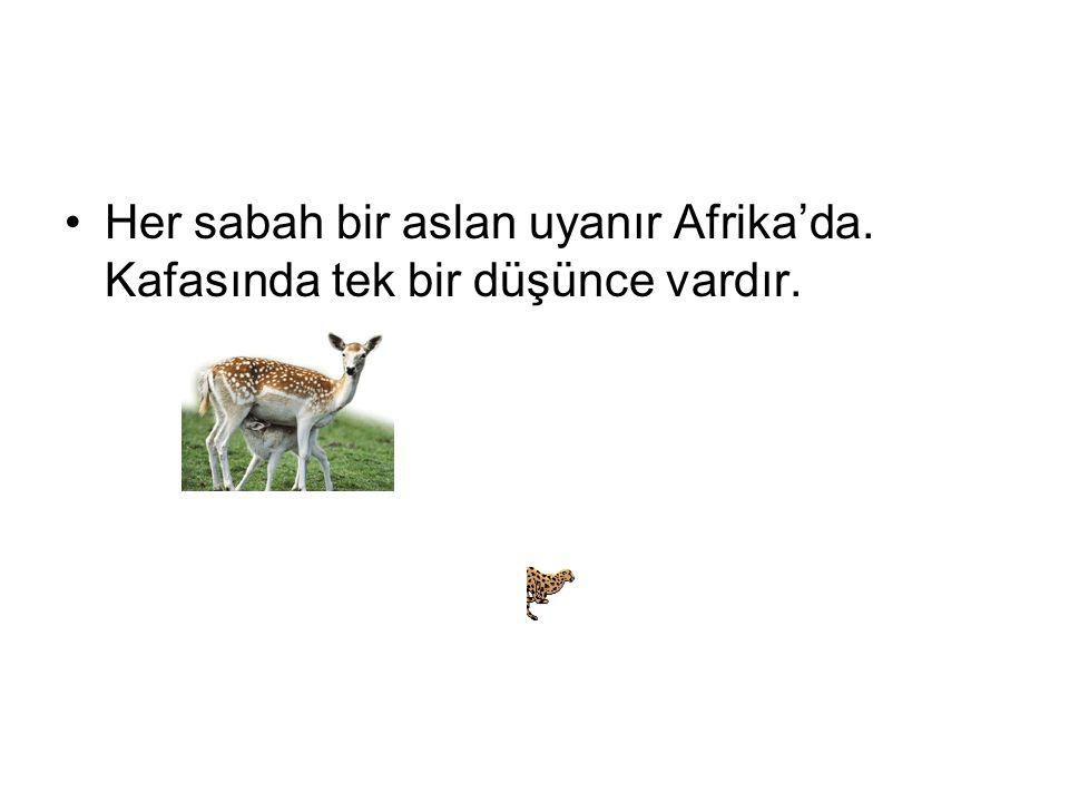 Her sabah bir aslan uyanır Afrika'da. Kafasında tek bir düşünce vardır.