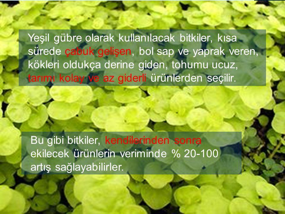 Yeşil gübre olarak kullanılacak bitkiler, kısa