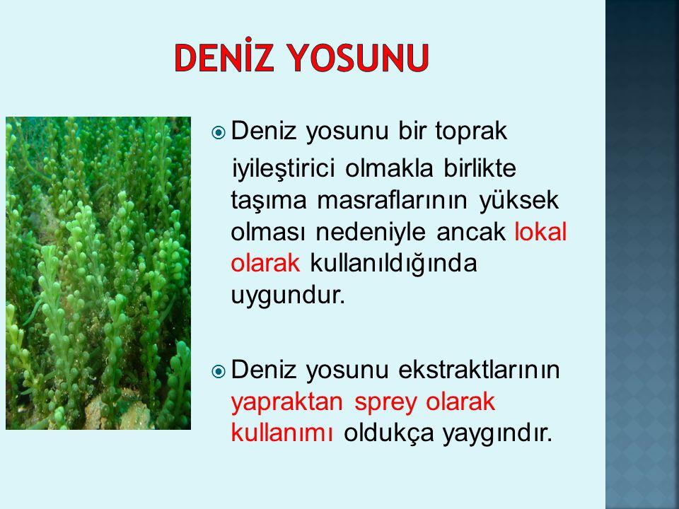 DENİZ YOSUNU Deniz yosunu bir toprak