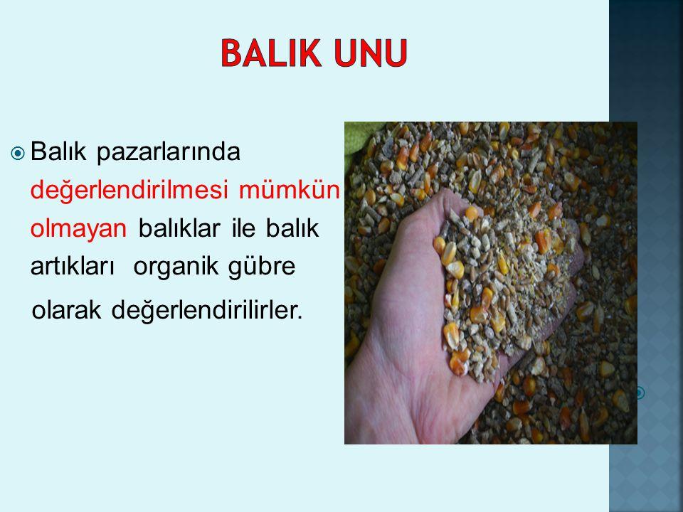 BALIK UNU Balık pazarlarında değerlendirilmesi mümkün olmayan balıklar ile balık artıkları organik gübre.