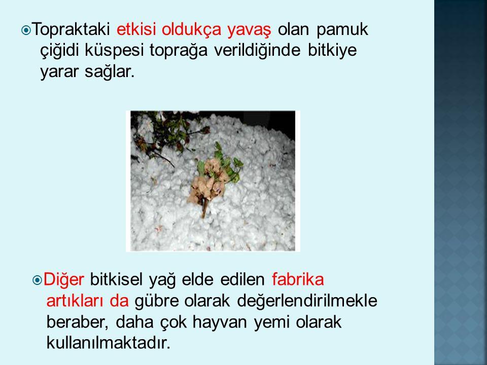Topraktaki etkisi oldukça yavaş olan pamuk