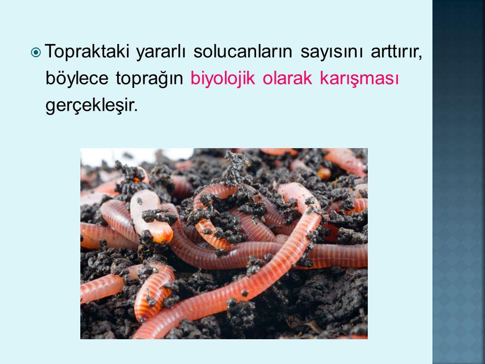 Topraktaki yararlı solucanların sayısını arttırır,