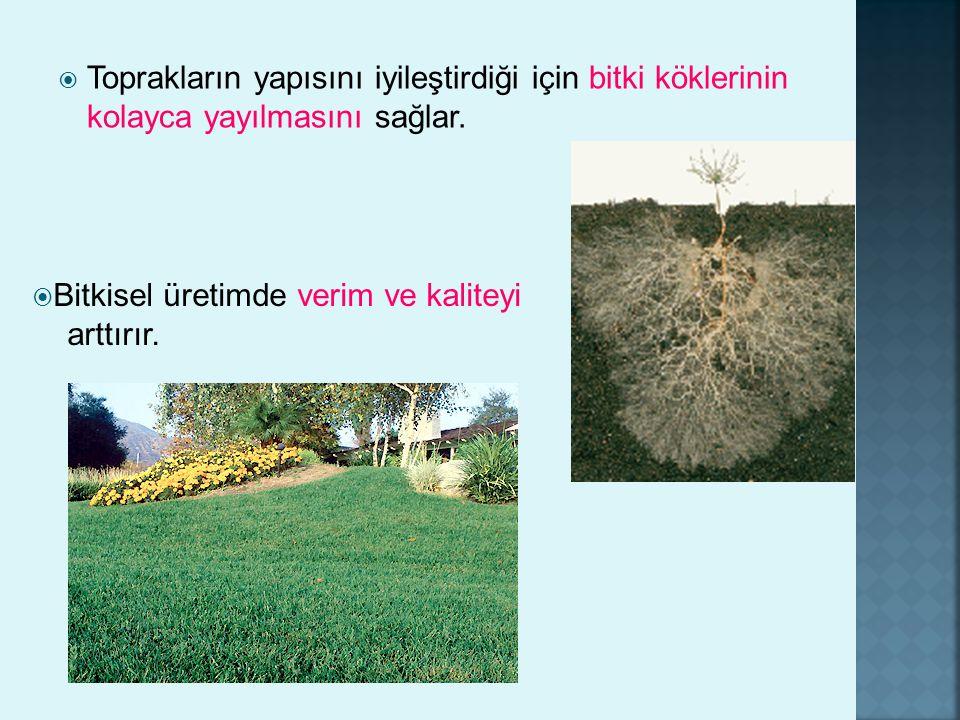 Toprakların yapısını iyileştirdiği için bitki köklerinin kolayca yayılmasını sağlar.