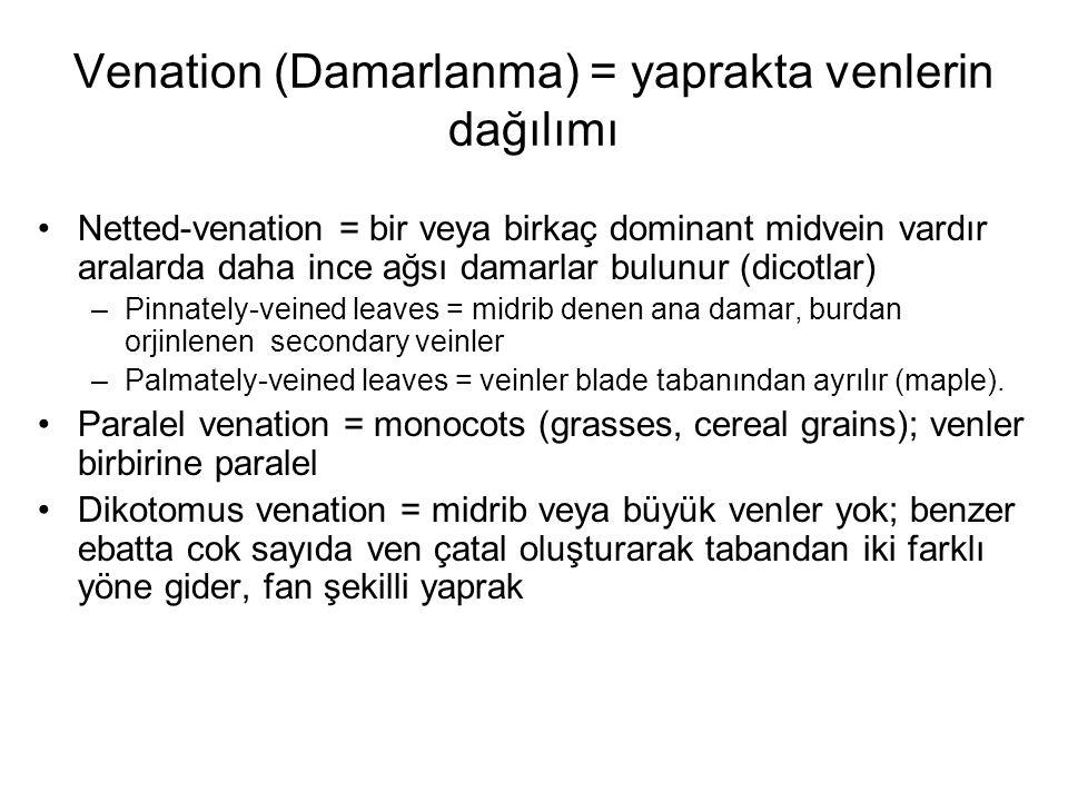 Venation (Damarlanma) = yaprakta venlerin dağılımı