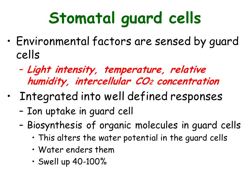 Stomatal guard cells Environmental factors are sensed by guard cells