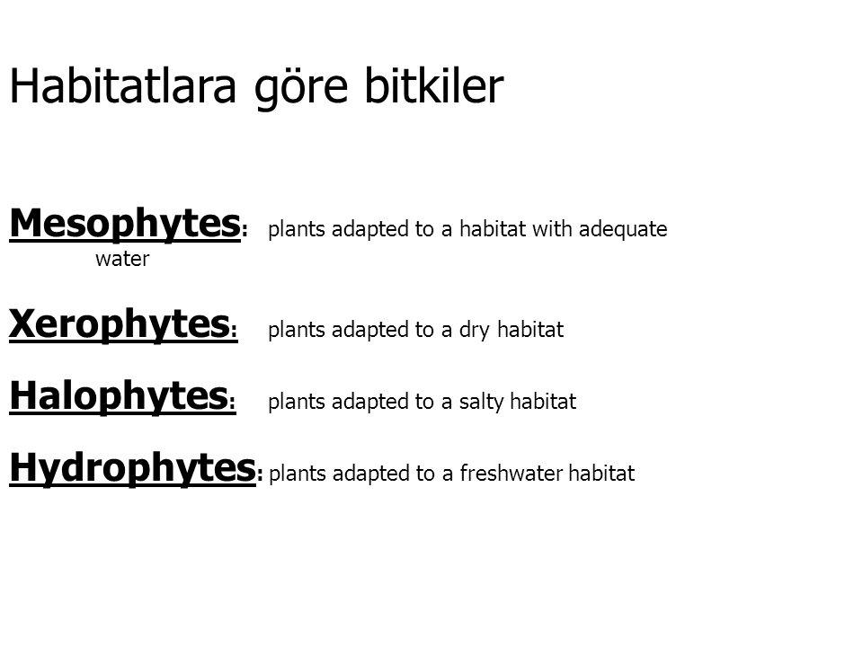 Habitatlara göre bitkiler