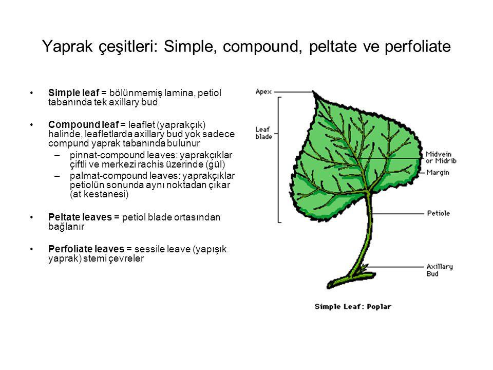 Yaprak çeşitleri: Simple, compound, peltate ve perfoliate