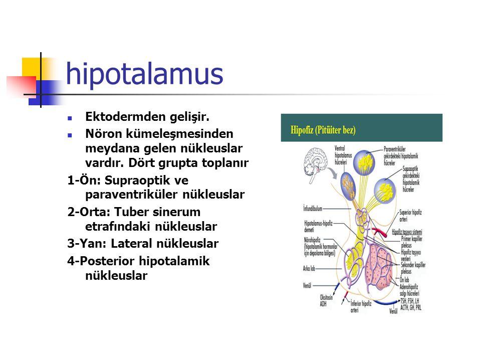 hipotalamus Ektodermden gelişir.