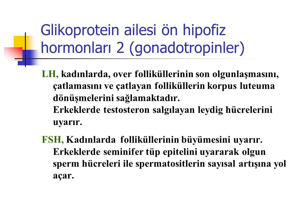 Glikoprotein ailesi ön hipofiz hormonları 2 (gonadotropinler)